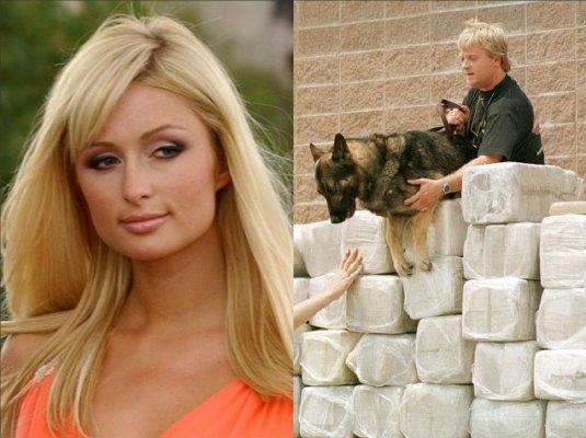 Paris Hilton bricks